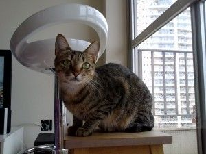 Gatinho fofo - Cute kitty